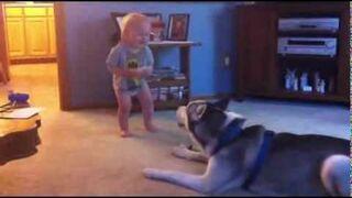 Rozmowa dziecka z psem husky