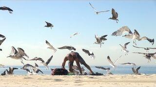 Szalone ptaki na plaży - żart z popcornem