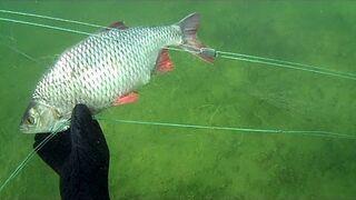 Ryby w kłusowniczej sieci