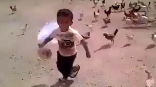 Kurczaki ścigają dzieciaka