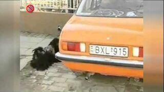 Pies uzależniony od spalin samochodowych