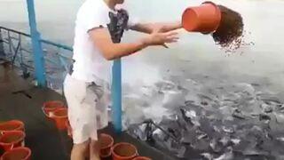 Karmienie szalonych ryb