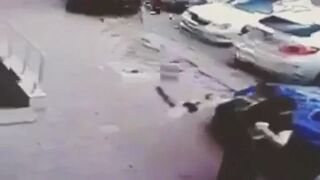 Kung Fu Kot atakuje Psa
