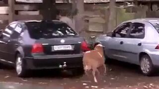 Szalona koza terroryzuje ludzi