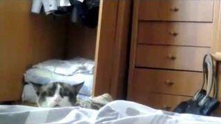 Bardzo zaciekawiony kotek - funny