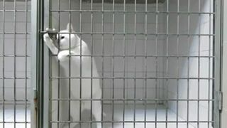 Prison Break - This Cat got skills!