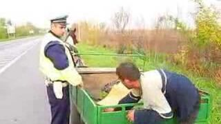 Kontrola drogowa, pijany woźnica z koniem w Rosji