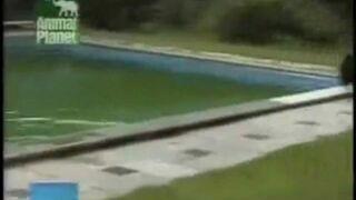 Pies i piłka w basenie