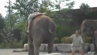 Zabawna sytuacja ze słoniem