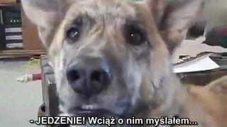 Rozmowa z psem o jedzeniu (Gadający pies)