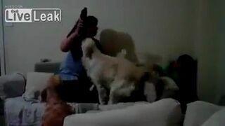 Matka zaatakowała dziecko, reakcja psa natychmiastowa