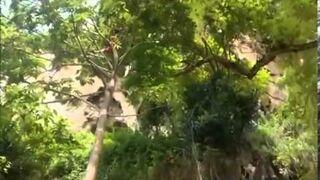 Wszedł w 12 sekund na wysokie drzewo!
