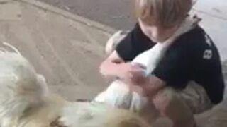 Dzieciak przytula kurę