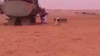 Arab sra na pustyni