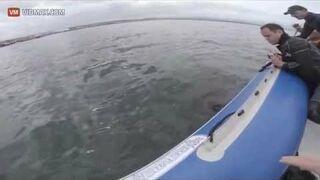 Atak Rekina Na Ponton