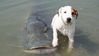 Pies który łowi ryby