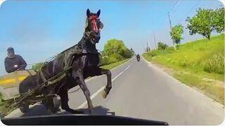 Wystraszony koń na drodze i refleks motocyklistki