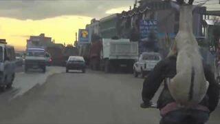 Jazda rowerem z kozą na plecach