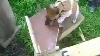 Pies inżyniera ma klawe życie