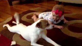 Pies uczy raczkować dziewczynkę
