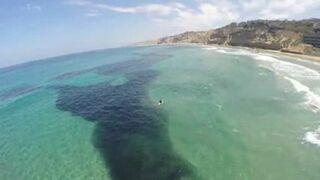 Miliony sardeli w pobliżu La Jolla