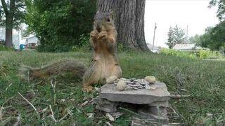 Wiewiórka wydymała kamerę