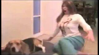 Beagle - strzela kupą HIT!!