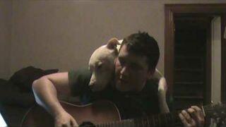 Ktoś mówił, że Pitbull to groźny pies?