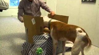 Pit Bull dostał prezent na 11 urodziny. Zobacz reakcje.