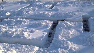 Labirynt w śniegu dla psa