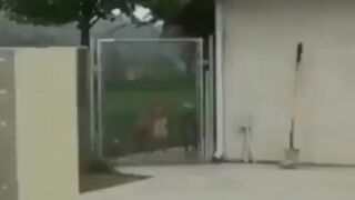 Nie drażnij psa za ogrodzeniem!