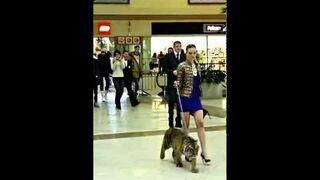 Spacer z tygrysem po centrum handlowym